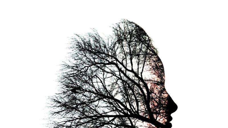 Come un ramo secco