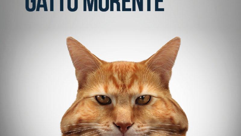 Le straordinarie cognizioni di un gatto morente